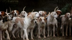 Porta-Perros
